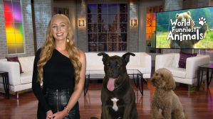 World S Funniest Animals Debuts First Season On The Cw Network Cw Seattle